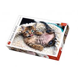 Puzzle s koťátkem (1.000...